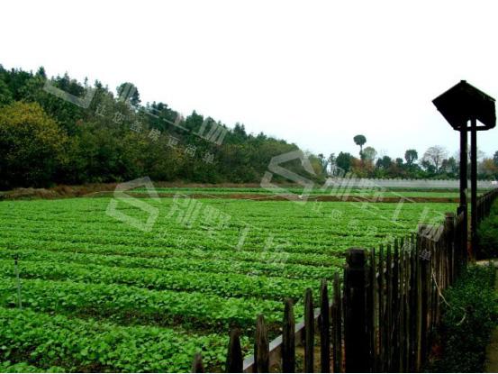 农业园开发